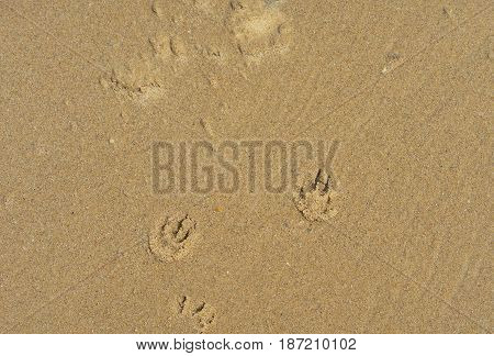 Sand texture background with puppy dog paw prints