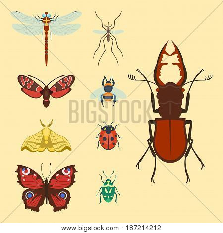 Colorful insects icons isolated wildlife wing detail summer bugs wild vector illustration. Nature pest small animal art sign element stag detail graphic.