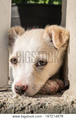 Cute crossbreed beige dog puppy looking at the camera