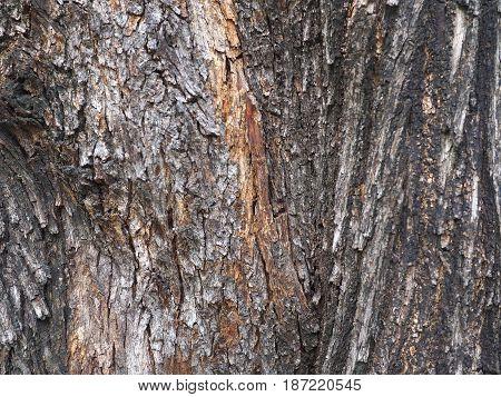 bark of tree texture. bark of tree texture.