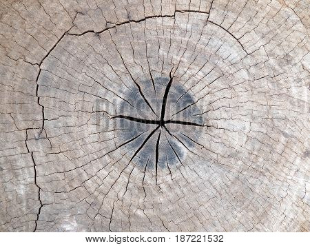 old tree stump texture background. old tree stump texture background.