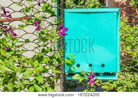 Lattice garden gate with a mailbox twined with grapes and clematis on a sunny summer day close-up