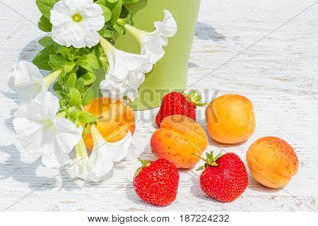 Red ripe strawberry orange apricots and white petunia in a green flowerpot on a white wooden table in a summer garden close-up