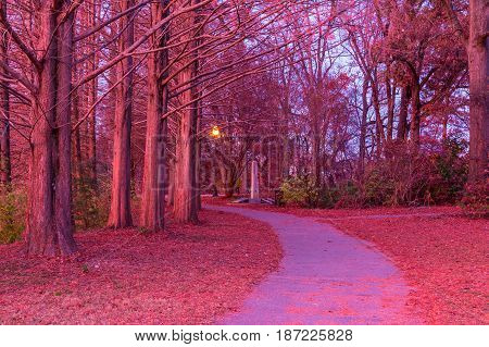 The footpath and trunks of hornbeams in the Piedmont Park in beautiful pink glow of twilight Atlanta USA