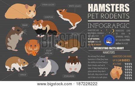 Pets_rodents_guinea Pig_7