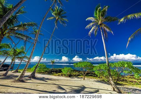Tropical beach and ocean on Samoa Island with palm trees during late afternoon