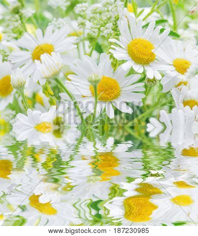 Bouquet of daisies covered dew drops closeup reflected in a water surface with small waves