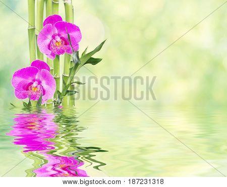 Several stem of Lucky Bamboo (Dracaena Sanderiana) with green leaves and three pink orchid flowers on natural background reflected in a water surface with small waves with copy-space