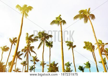 Tropical scenery. Beautiful palm beach. Tropical vacations. Relaxing tropical holidays. Idyllic tropical scene. Dominican Republic