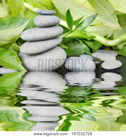Spa concept with gray basalt massage stones and lush green foliage on a black background reflected in a water surface with small waves