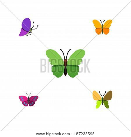 Flat Moth Set Of Butterfly, Summer Insect, Archippus And Other Vector Objects. Also Includes Moth, Monarch, Butterfly Elements.