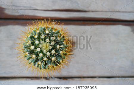 Top view cactus in small pots on wooden table.