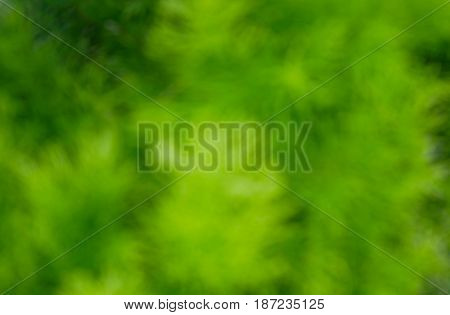 Abstract green natural blurred background natural texture for web and graphic design.