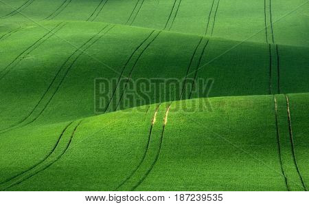 Moravian summer rolling landscape on sunset in green  colors. Moravia, Czech Republic.Green spring rolling hills of wheat that resemble corduroy with lines stretching into the distance.Europe