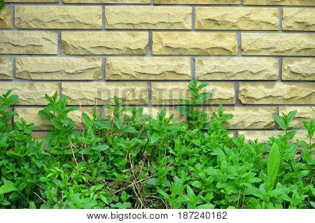 The lower part of the brick wall is buried in green vegetation.