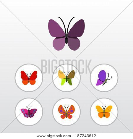 Flat Butterfly Set Of Archippus, Violet Wing, Summer Insect And Other Vector Objects. Also Includes Moth, Milkweed, Monarch Elements.