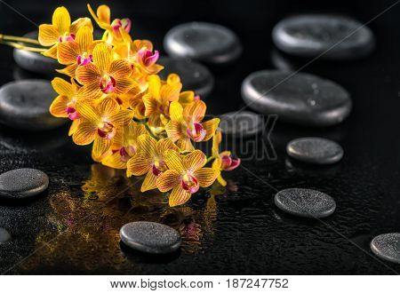 Beautiful Spa Concept Of Blooming Twig Orange Orchid Flower, Phalaenopsis With Water Drops And Zen B