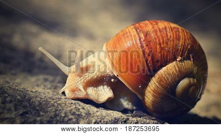 Beautiful Snail With Shell In Nature. Natural Colorful Background With Sun.
