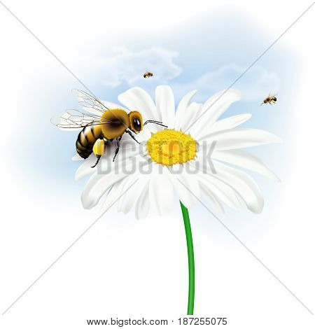 Still life with bees daisy flower and sky with clouds on white background. Vector illustration.
