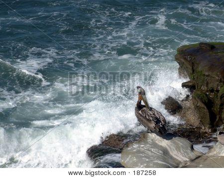 Pelican On Cliff