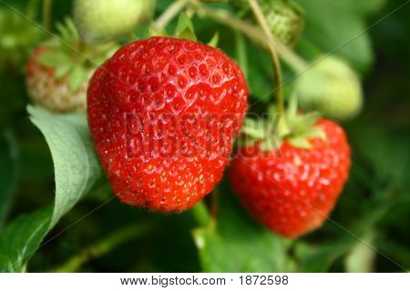 Mellow Strawberry