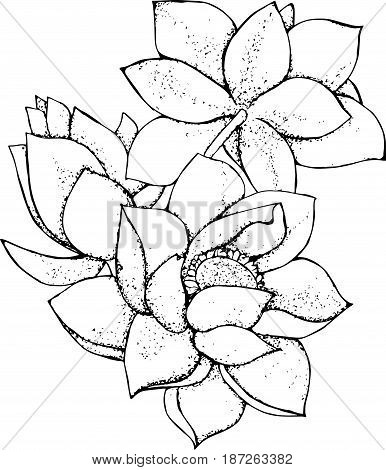 Illustration of lotus flower in style. Black and white lotus pattern