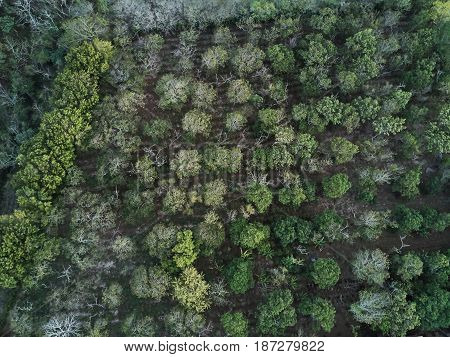 Forest Trees View Fron Top
