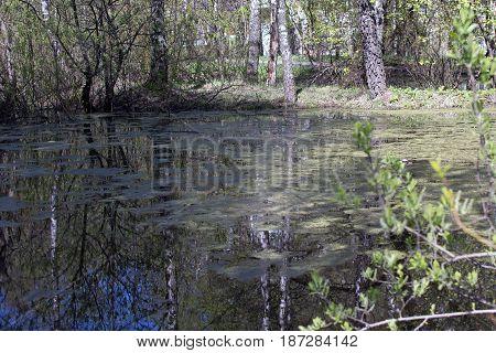 Natural Swamp Pond