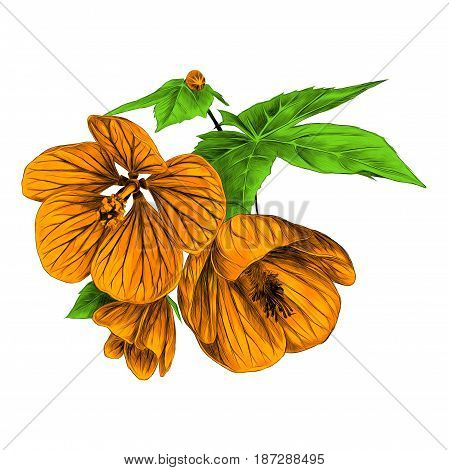 three orange flowers with leaves Boutillon maple room kanatik sketch vector graphics color picture