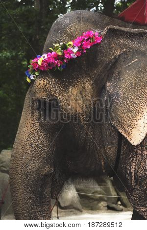 A photo of an elephant wearing a flower wreath in a zoo