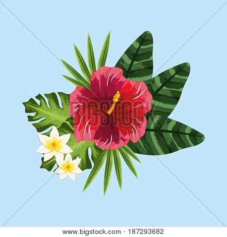 beauty and exotic flowers, roses and plants, vector illustration