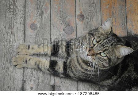 poz veren hayvan kedi animals göz bakış