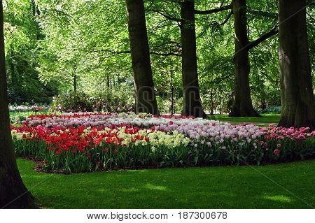 Flower bed of various tulips in the shade of trees in the Royal Keukenhof Park