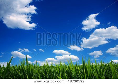 Blue sky with white clouds and fresh green grass