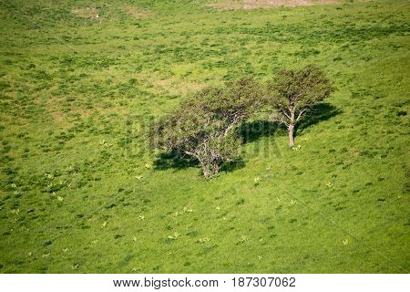 Tree on a green glade. In the spring