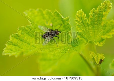 Detail of house fly on leaf in garden