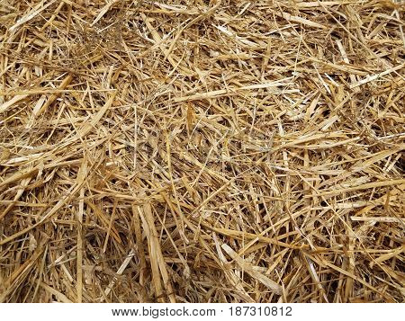 brown hay or straw strewn on the ground