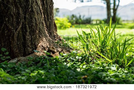 Background with focus on green grass clump closeup next to tree trunk in the shade