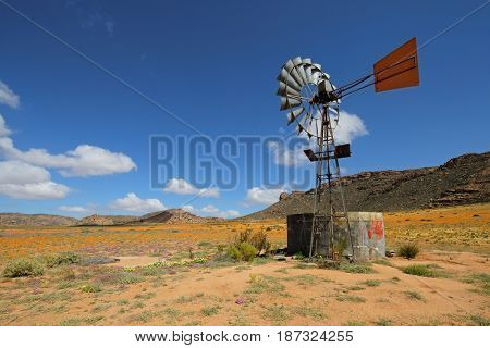 Landscape with colorful wild flowers and windmill, Namaqualand, South Africa