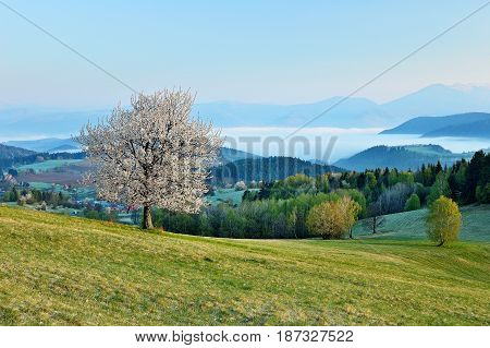 Spring meadows and fields landscape in Slovakia. Low Tatras panorama with snowy peaks. Blooming cherry trees. Cloudly inversion after the rain.