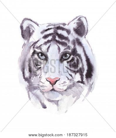 White tiger. Watercolor painting, animal illustration