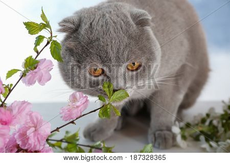 Cute cat with blossoming branches at home