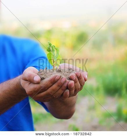 brotan en las palmas como un símbolo de la protección de la naturaleza