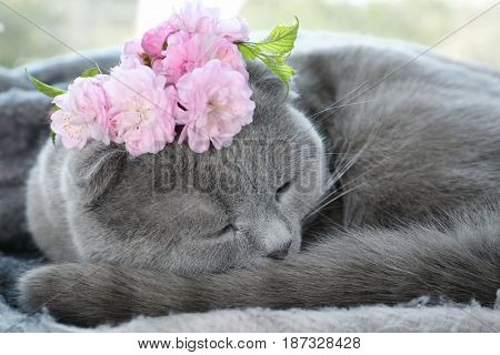 Cute cat with wreath lying at home, closeup