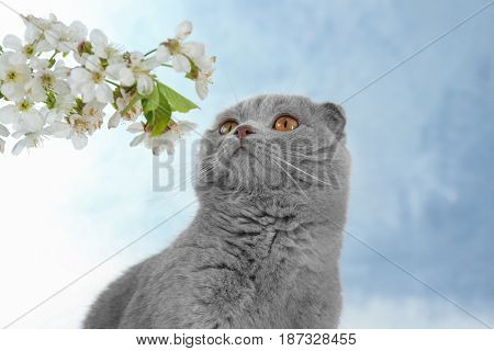 Cute cat with blossoming branch on light background