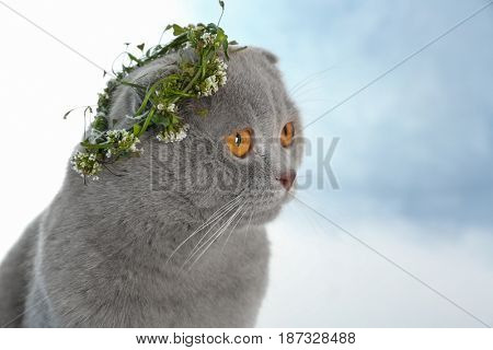 Cute cat with wreath on light background
