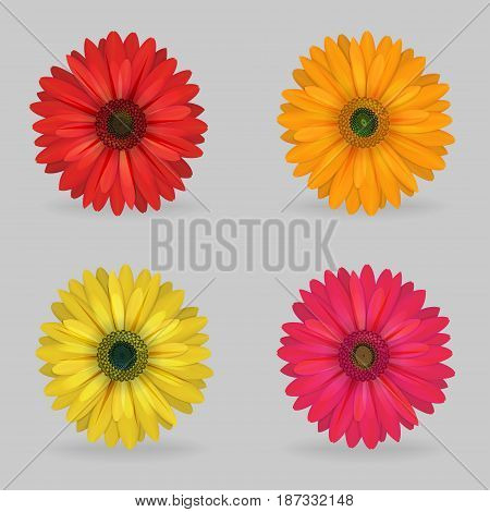 A collection of vibrant multi color lovely gerbera daisy flowers. Realistic close-up look, detailed petals, 4 colour variations.