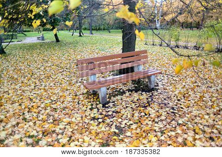 A lonely bench in the autumn park of Sosnovka, St. Petersburg. Soft focus