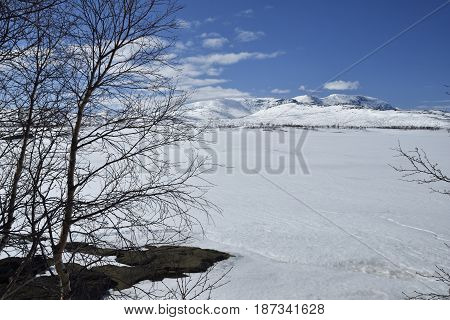 View over a frozen lake with a birch in foreground and a snowy mountain in background picture from the North of Norway.