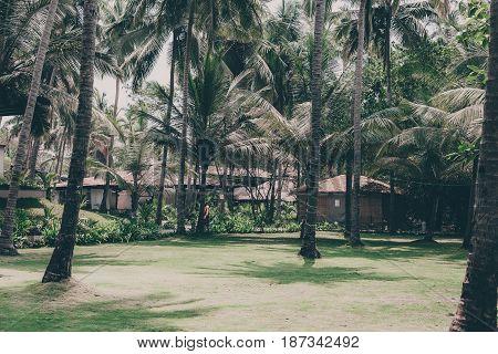 Palm Trees On Tropical Coast Background.